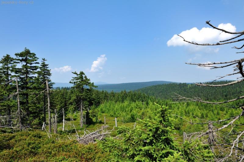 Pohled z Travné hory k polské straně NPR Kralický Sněžník