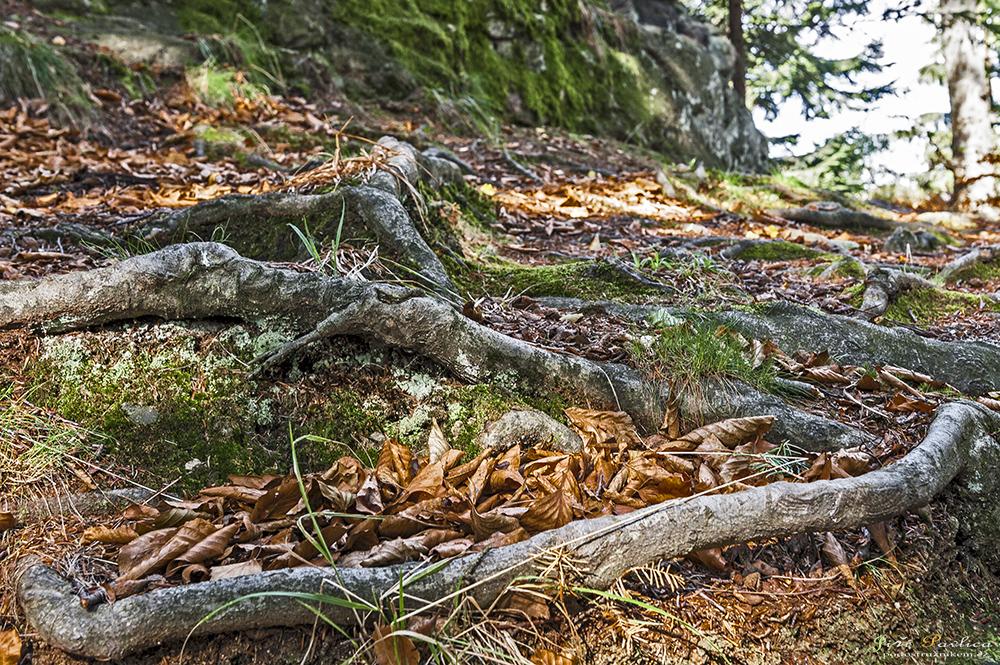 Cestou na Čertovy kameny