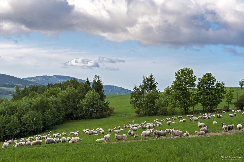 Pastviny na Holém vrchu